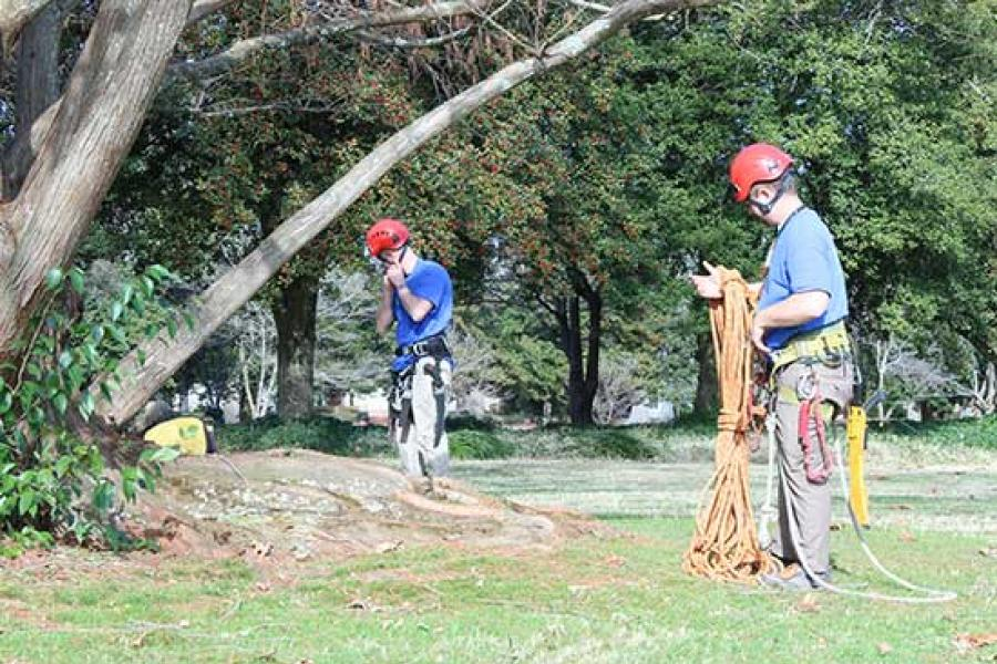Aventura-Miami-Dade County FL Tree Trimming and Stump Grinding Services-We Offer Tree Trimming Services, Tree Removal, Tree Pruning, Tree Cutting, Residential and Commercial Tree Trimming Services, Storm Damage, Emergency Tree Removal, Land Clearing, Tree Companies, Tree Care Service, Stump Grinding, and we're the Best Tree Trimming Company Near You Guaranteed!