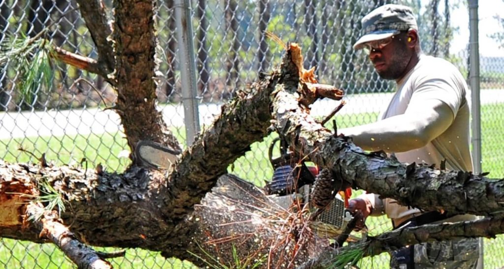 Coral Gables-Miami-Dade County FL Tree Trimming and Stump Grinding Services-We Offer Tree Trimming Services, Tree Removal, Tree Pruning, Tree Cutting, Residential and Commercial Tree Trimming Services, Storm Damage, Emergency Tree Removal, Land Clearing, Tree Companies, Tree Care Service, Stump Grinding, and we're the Best Tree Trimming Company Near You Guaranteed!