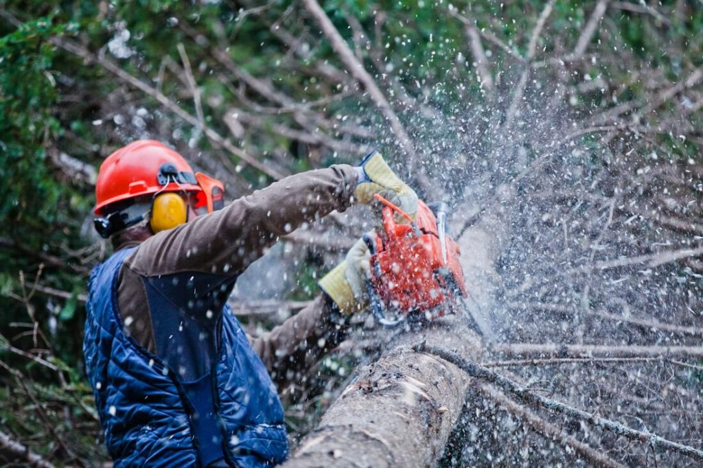 Country Club-Miami-Dade County FL Tree Trimming and Stump Grinding Services-We Offer Tree Trimming Services, Tree Removal, Tree Pruning, Tree Cutting, Residential and Commercial Tree Trimming Services, Storm Damage, Emergency Tree Removal, Land Clearing, Tree Companies, Tree Care Service, Stump Grinding, and we're the Best Tree Trimming Company Near You Guaranteed!