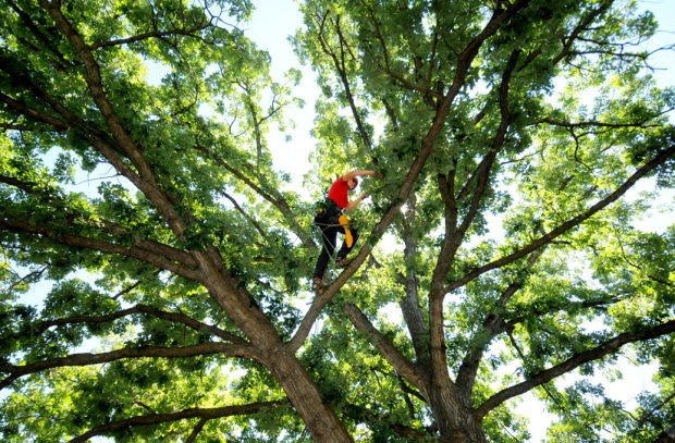 Cutler Bay-Miami-Dade County FL Tree Trimming and Stump Grinding Services-We Offer Tree Trimming Services, Tree Removal, Tree Pruning, Tree Cutting, Residential and Commercial Tree Trimming Services, Storm Damage, Emergency Tree Removal, Land Clearing, Tree Companies, Tree Care Service, Stump Grinding, and we're the Best Tree Trimming Company Near You Guaranteed!