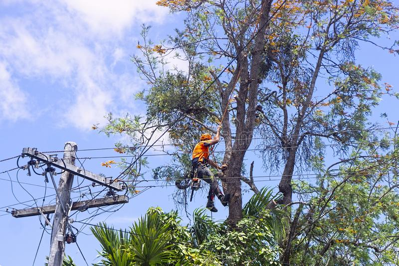 Hialeah-Miami-Dade County FL Tree Trimming and Stump Grinding Services-We Offer Tree Trimming Services, Tree Removal, Tree Pruning, Tree Cutting, Residential and Commercial Tree Trimming Services, Storm Damage, Emergency Tree Removal, Land Clearing, Tree Companies, Tree Care Service, Stump Grinding, and we're the Best Tree Trimming Company Near You Guaranteed!
