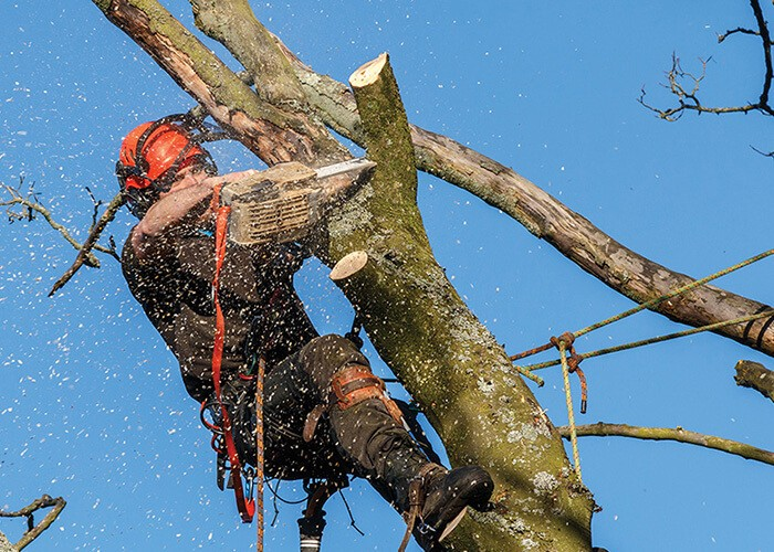 Kendall West-Miami-Dade County FL Tree Trimming and Stump Grinding Services-We Offer Tree Trimming Services, Tree Removal, Tree Pruning, Tree Cutting, Residential and Commercial Tree Trimming Services, Storm Damage, Emergency Tree Removal, Land Clearing, Tree Companies, Tree Care Service, Stump Grinding, and we're the Best Tree Trimming Company Near You Guaranteed!