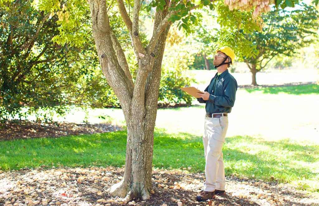 Key Biscayne-Miami-Dade County FL Tree Trimming and Stump Grinding Services-We Offer Tree Trimming Services, Tree Removal, Tree Pruning, Tree Cutting, Residential and Commercial Tree Trimming Services, Storm Damage, Emergency Tree Removal, Land Clearing, Tree Companies, Tree Care Service, Stump Grinding, and we're the Best Tree Trimming Company Near You Guaranteed!