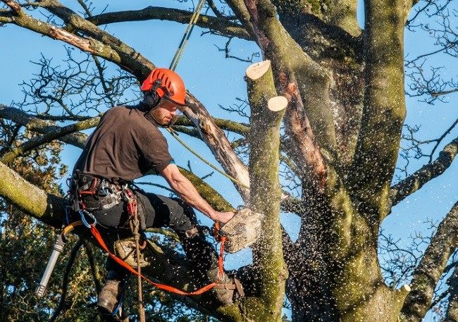 Miami-Miami-Dade County FL Tree Trimming and Stump Grinding Services-We Offer Tree Trimming Services, Tree Removal, Tree Pruning, Tree Cutting, Residential and Commercial Tree Trimming Services, Storm Damage, Emergency Tree Removal, Land Clearing, Tree Companies, Tree Care Service, Stump Grinding, and we're the Best Tree Trimming Company Near You Guaranteed!