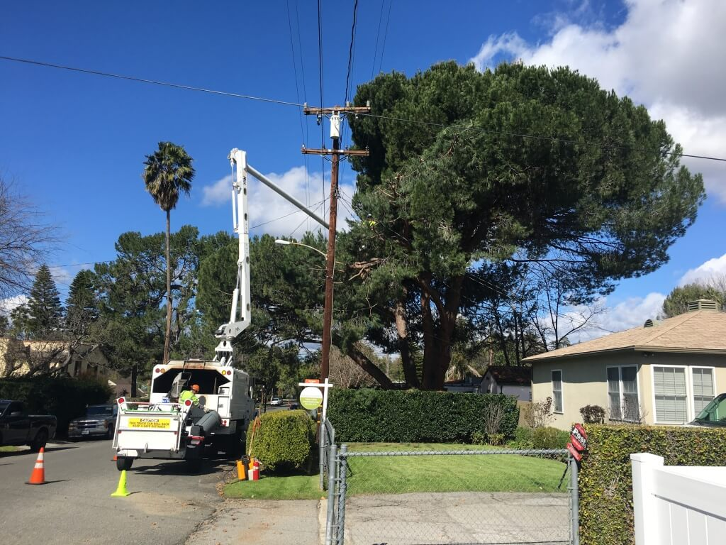 North Miami-Miami-Dade County FL Tree Trimming and Stump Grinding Services-We Offer Tree Trimming Services, Tree Removal, Tree Pruning, Tree Cutting, Residential and Commercial Tree Trimming Services, Storm Damage, Emergency Tree Removal, Land Clearing, Tree Companies, Tree Care Service, Stump Grinding, and we're the Best Tree Trimming Company Near You Guaranteed!
