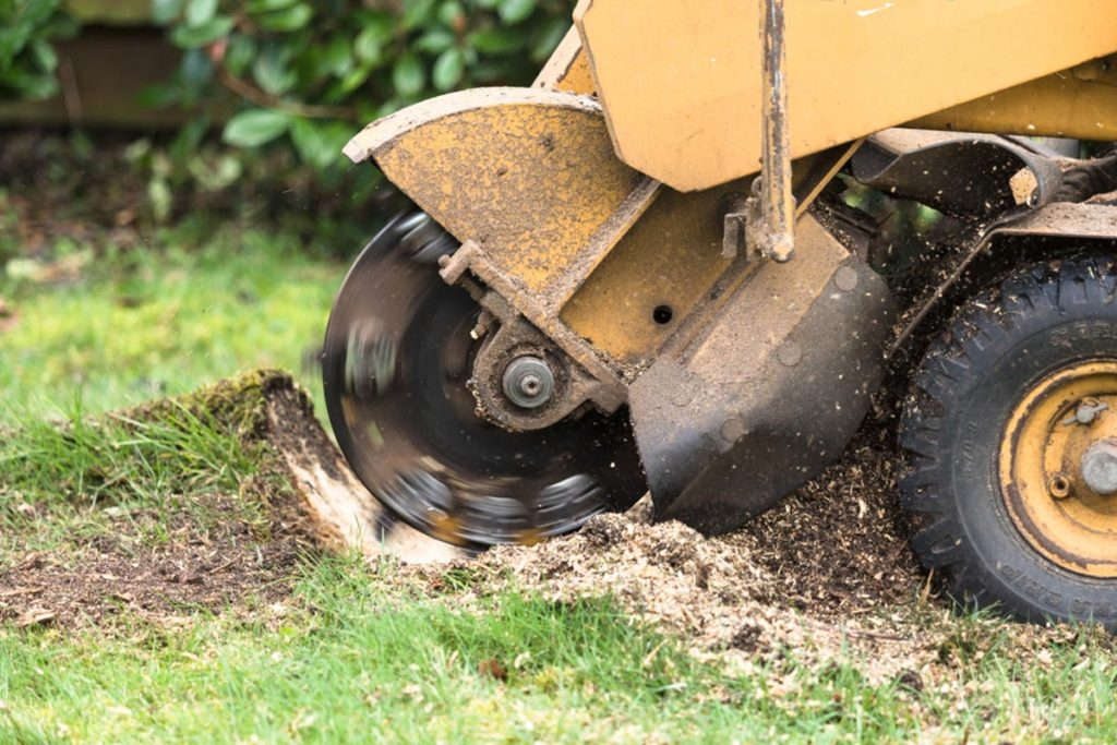 Stump Grinding-Miami-Dade County FL Tree Trimming and Stump Grinding Services-We Offer Tree Trimming Services, Tree Removal, Tree Pruning, Tree Cutting, Residential and Commercial Tree Trimming Services, Storm Damage, Emergency Tree Removal, Land Clearing, Tree Companies, Tree Care Service, Stump Grinding, and we're the Best Tree Trimming Company Near You Guaranteed!