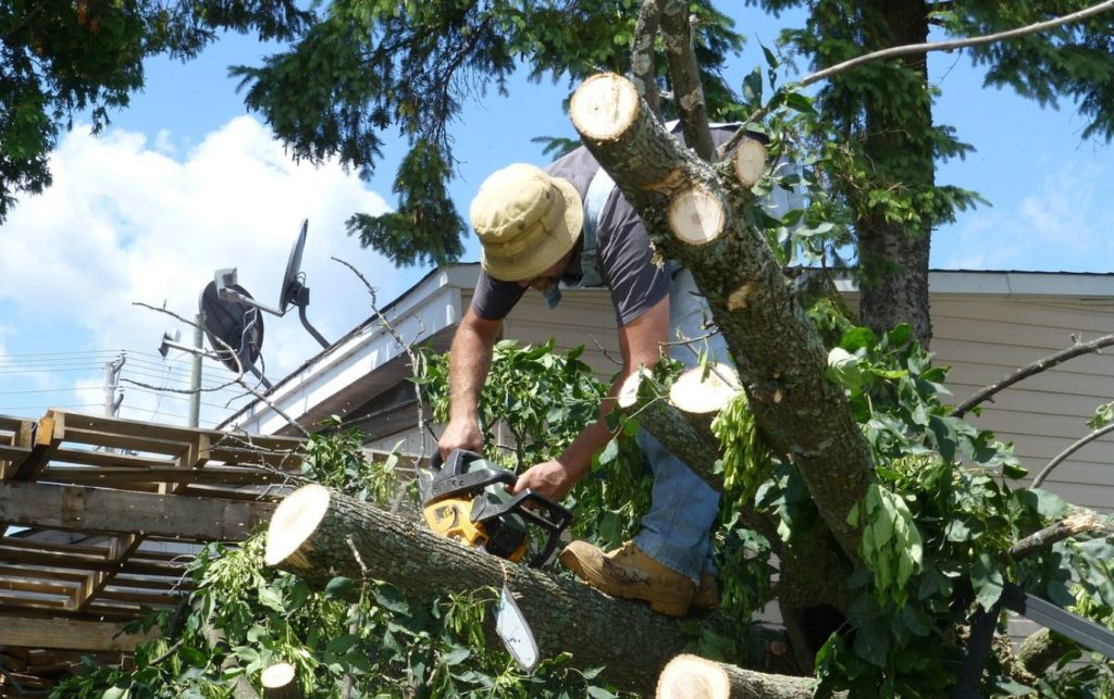 Tamiami-Miami-Dade County FL Tree Trimming and Stump Grinding Services-We Offer Tree Trimming Services, Tree Removal, Tree Pruning, Tree Cutting, Residential and Commercial Tree Trimming Services, Storm Damage, Emergency Tree Removal, Land Clearing, Tree Companies, Tree Care Service, Stump Grinding, and we're the Best Tree Trimming Company Near You Guaranteed!