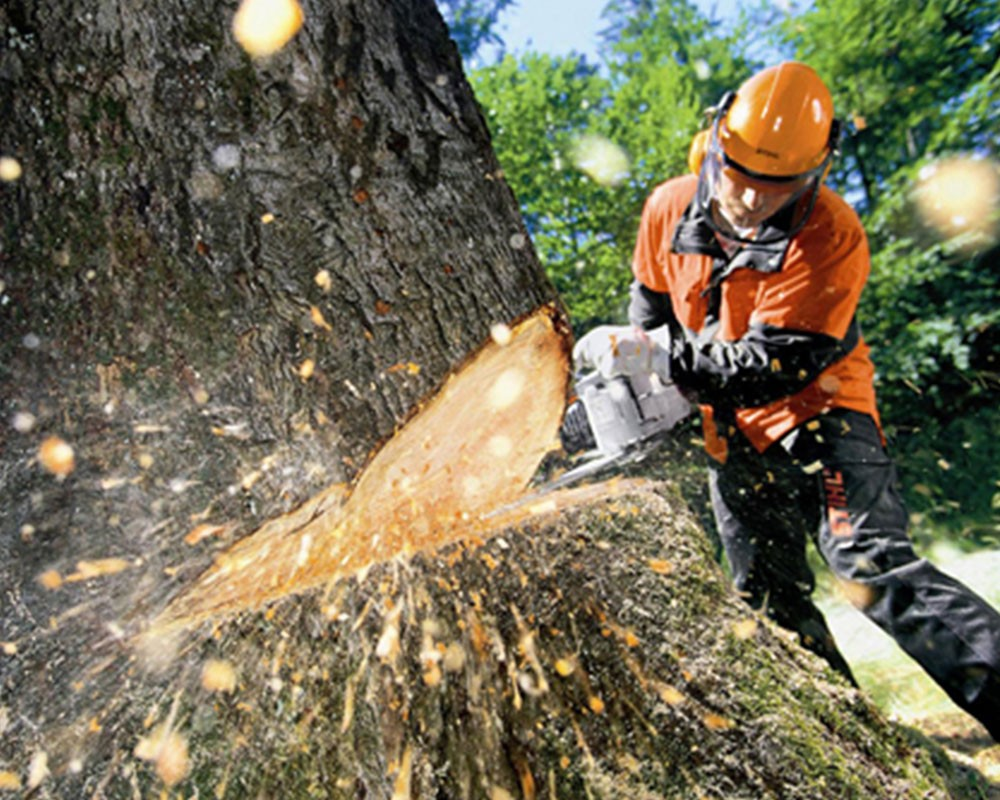 Tree Cutting-Miami-Dade County FL Tree Trimming and Stump Grinding Services-We Offer Tree Trimming Services, Tree Removal, Tree Pruning, Tree Cutting, Residential and Commercial Tree Trimming Services, Storm Damage, Emergency Tree Removal, Land Clearing, Tree Companies, Tree Care Service, Stump Grinding, and we're the Best Tree Trimming Company Near You Guaranteed!